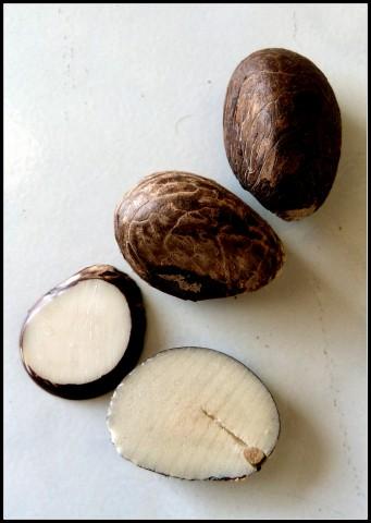 La graine de Tagua - ivoire végétal