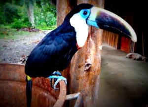 Dans l'Amazonie